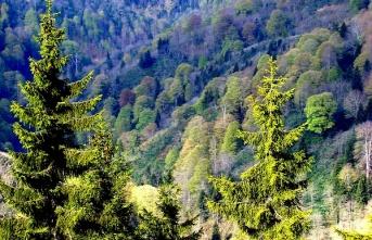 Yanan Ormanlık Alanlarda Ekosistemin Eski Haline Dönmesi Uzun Zaman Alıyor