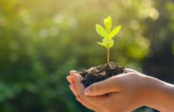 Milli Ağaçlandırma Günü İçin Ücretsiz Fidan Veriliyor