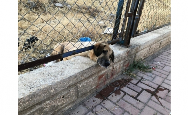 Tel örgülere sıkışan köpeği itfaiye kurtardı