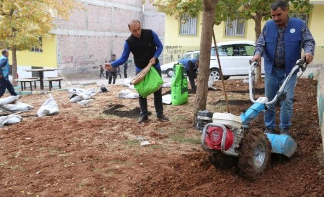 Haliliye'de ekipler ağaçları budadı