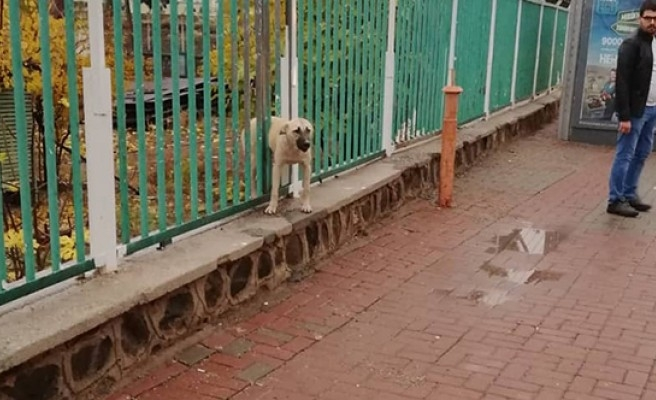 Korkuluklara sıkışan köpeği itfaiye kurtardı