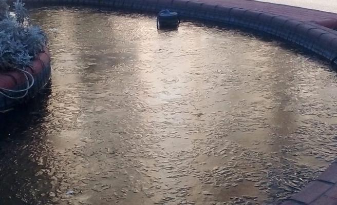 Şanlıurfa'da soğuk havanın etkisiyle don olayları yaşandı