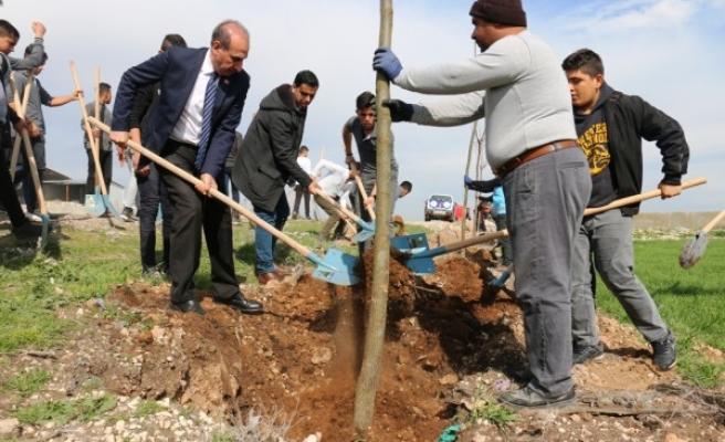 Akçakale'de 'ağaçlandırma' seferberliği