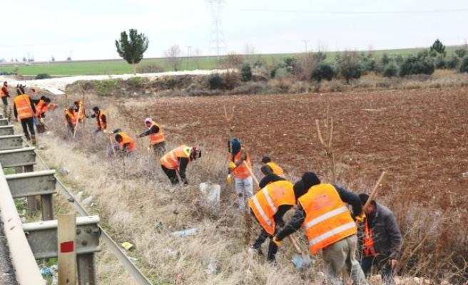 Şanlıurfa'da 150 bin ağaç toprakla buluştu