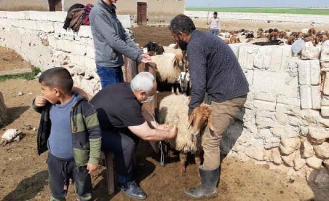 Telabyad'da tarım ve hayvancılık çalışmaları sürüyor