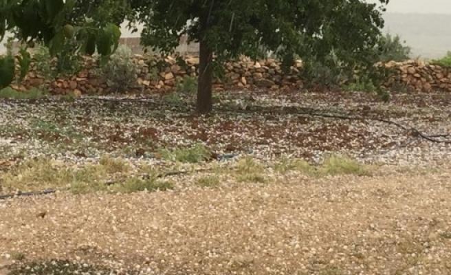 Şanlıurfa'da etkili olan dolu, ekinlere zarar verdi