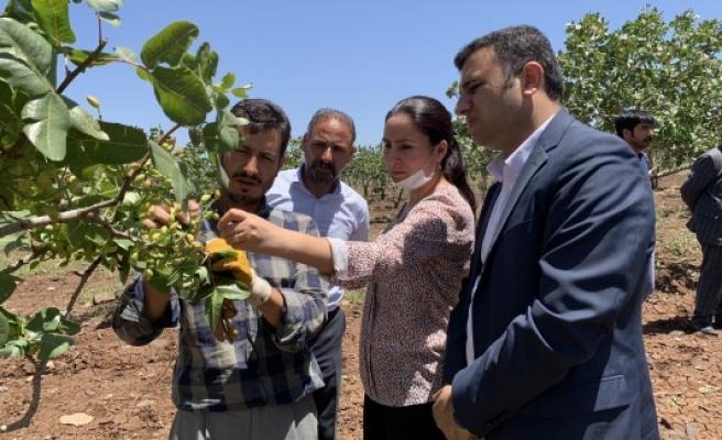 HDP'li vekillerden Urfa çiftçisi için çağrı: Zarar karşılanmalı