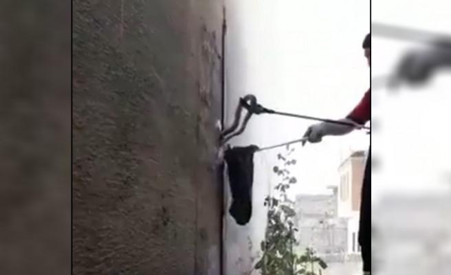 Şanlıurfa'da yakalanan yılan, doğaya salındı