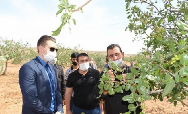 Urfa'da dolu vurmuştu: Kaymakamdan destek ziyareti
