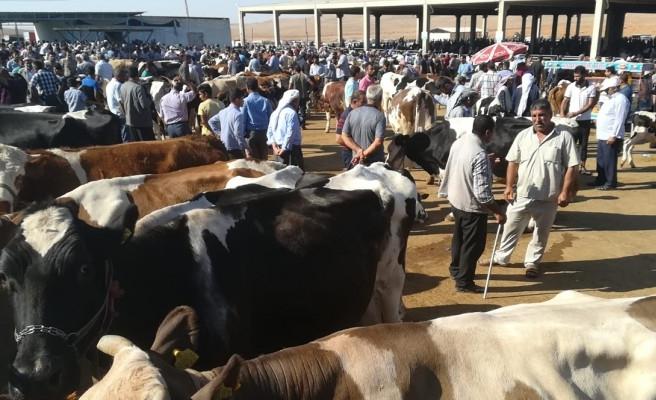 Şanlıurfa'daki hayvan pazarları için alınan kararlar duyuruldu