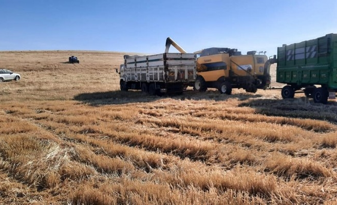 Atıl durumdaki araziden 340 ton hasat elde edildi