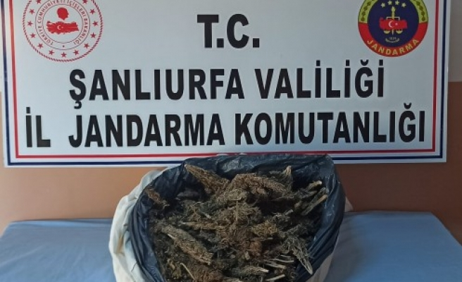 Viranşehir'de kaçakçılık operasyonu: 5 şüpheli yakalandı