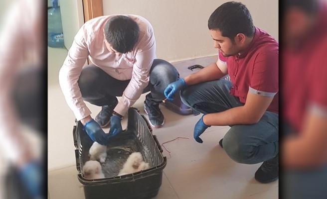 Mardin'de bulunan baykuşlar Urfa'ya getirilecek