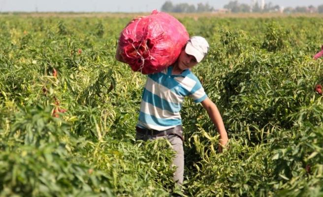 Tarım işçisi çocuklar için Urfa'dan dayanışma çağrısı