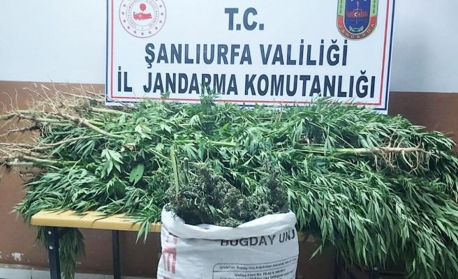 Şanlıurfa'da uyuşturucu operasyonu: 7 tutuklama