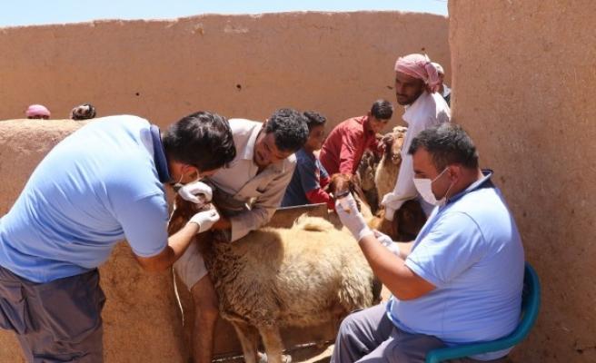 Barış Pınarında tarım ve hayvancılığa destek