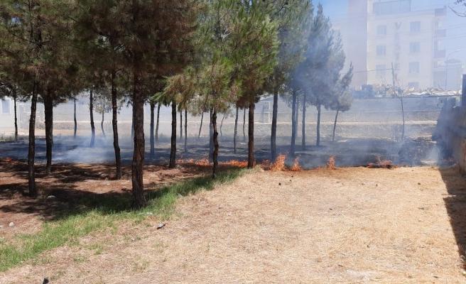 Urfa'nın ilçesinde yüzlerce ağaç yanma tehlikesi atlattı