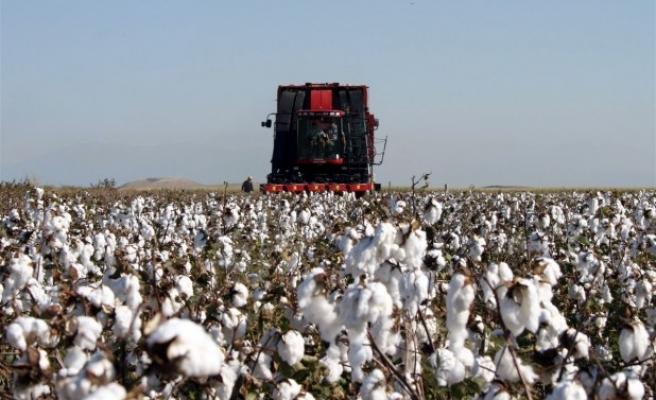 TZOB Başkanı Bayraktar, pamuk üreticileri için destek istedi