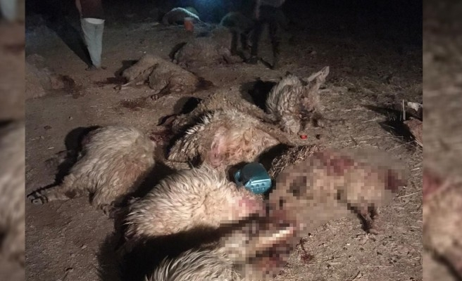 Şanlıurfa'da 150 küçükbaş zehirli ottan telef oldu!