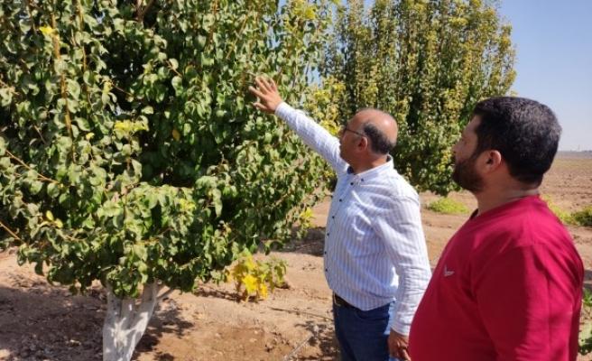 Resulayn ve Telabyad'da tarım ve hayvancılığa destek veriliyor