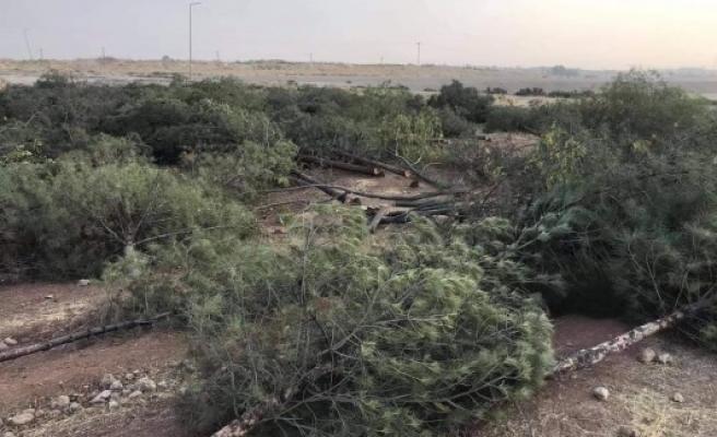 Urfa'da yine ağaç katliamı: Vatandaş tepkili!
