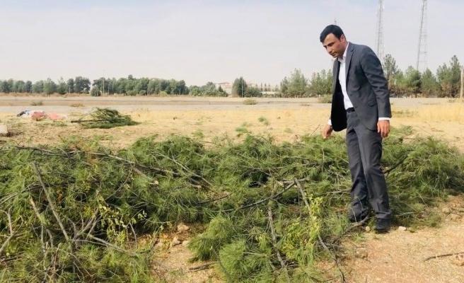 Şanlıurfa'daki ağaç katliamı için suç duyurusu