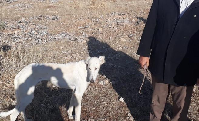 Urfa'da kaçak avcılara göz açtırılmıyor