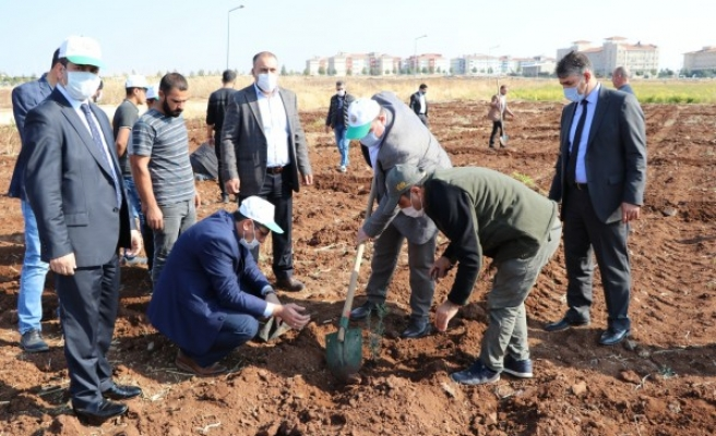 Viranşehir'den kampanyaya destek! Fidanlar dikildi