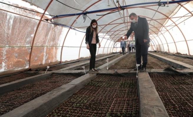Büyükşehirde 1.5 milyon TL'lik tasarruf: Kendi çiçeğini üretiyor