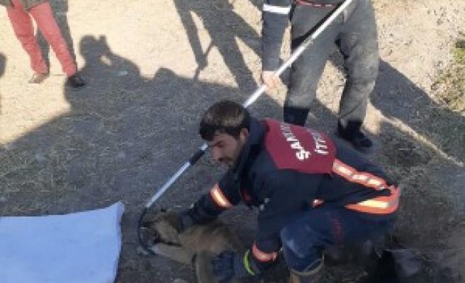 Şanlıurfa'da su borusuna sıkışan köpek kurtarıldı