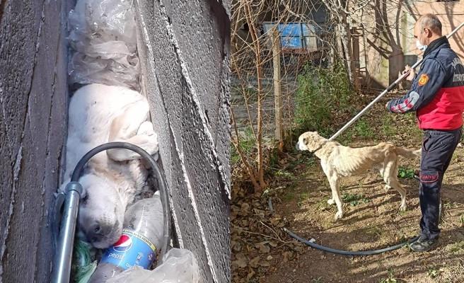 Suruç'ta bina boşluğuna sıkışan köpeği itfaiye kurtardı