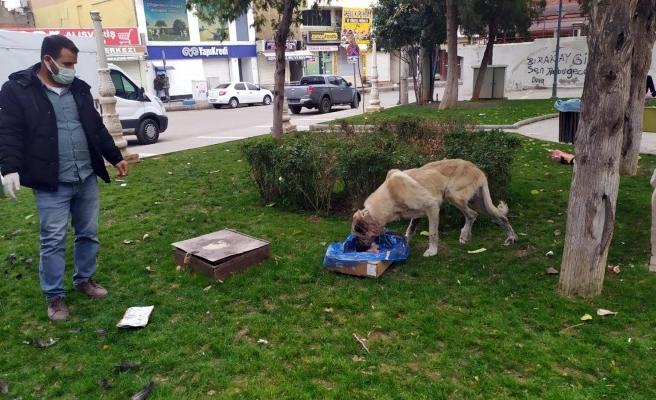 Urfa'nın ilçesinde sokak hayvanları unutulmadı