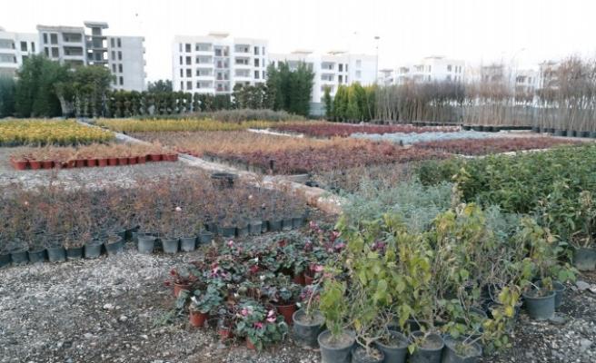 Eyyübiye'deki parklara farklı türlerden ağaçlar dikilecek!