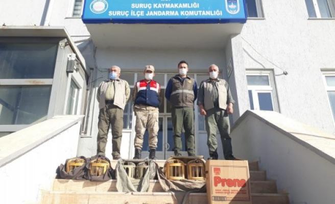 Suruç'ta kaçak avcılar yakalandı