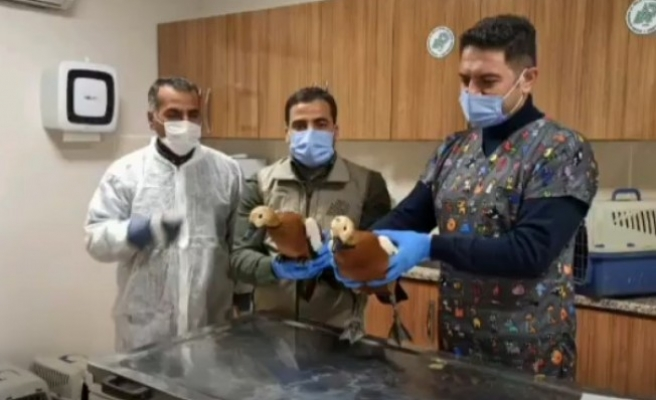 Şanlıurfa'da yabani kuşlar tedavi edildi