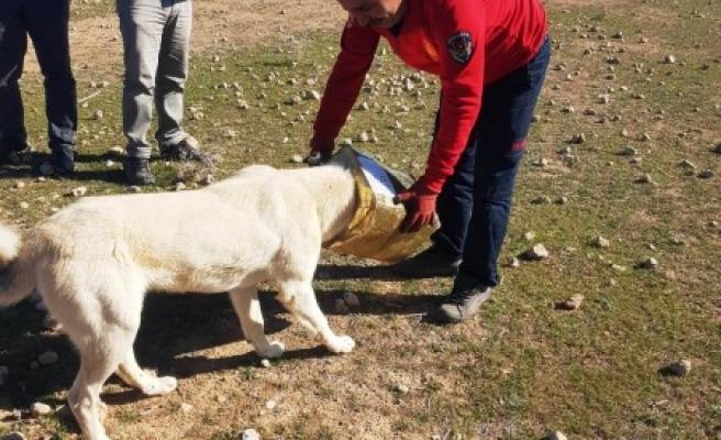 Kafası tenekeye sıkışan köpeği itfaiye kurtardı