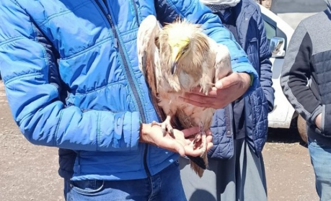 Siverek'te Mısır akbabası bulundu (EK)
