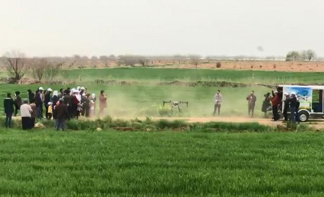 Şanlıurfa'da tarlalar droneile ilaçlandı