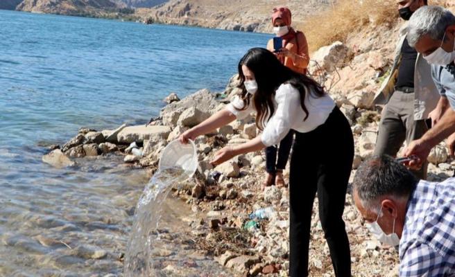 Fırat'a 75 bin adet yavru Şabut bırakıldı