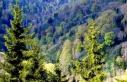 Yanan Ormanlık Alanlarda Ekosistemin Eski Haline...