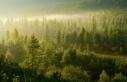 Yeni Ormanlık Alan Oluşturmak Faydalı Mı?