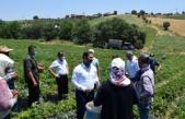 Mevsimlik işçilerin sorununa Urfalı kaymakamdan çözüm