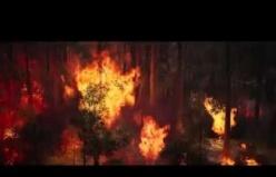 Ormanlar yanmasın hayaller kül olmasın