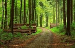 'Ormanları Birlikte Koruyacağız'