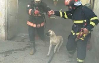 Şanlıurfa'da ahırda yangın