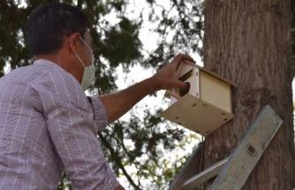 Viranşehir'de parklara kuş yuvaları yerleştirildi