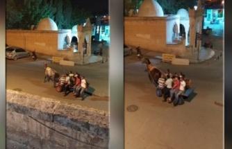 Urfa'da hayvana eziyet saniye saniye görüntülendi!