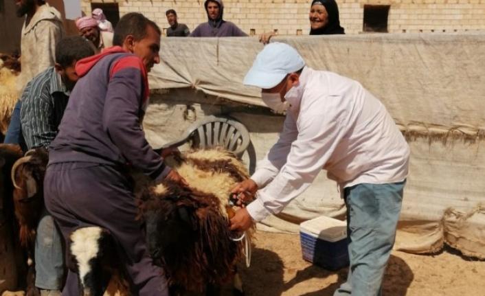 Barış Pınarı bölgesinde hayvanlar aşılandı