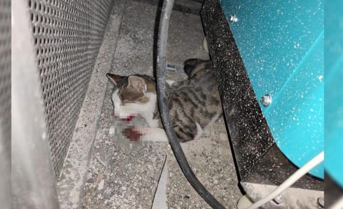 Şanlıurfa'da kediyi işkence ile öldürdüler